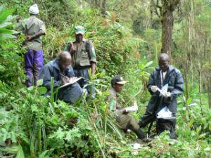 Karisoke's Theodette Gatesire leads a census team