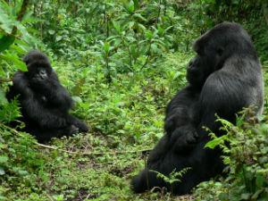 Umwana and Rano