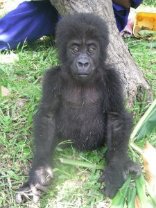 Kyasa one week after rescue