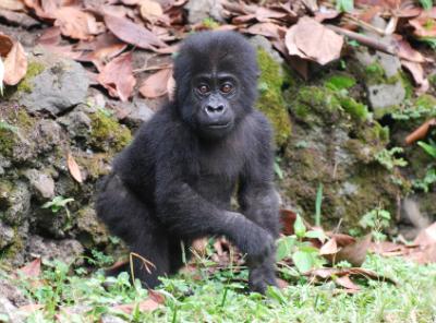 Kyasa in Goma
