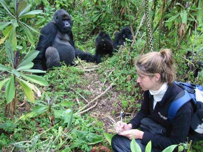 Aging gorilla Titus with Dr. Tara Stoinski