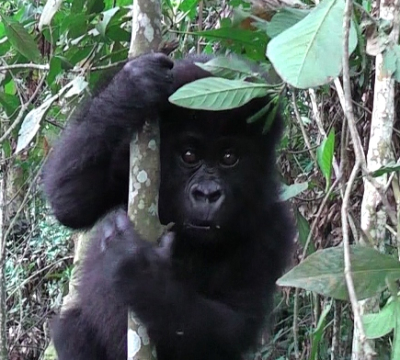 Kyasa explores the forest