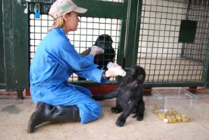 Sandy Jones feeds Ndjingala and Kyasa