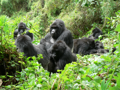 Kuryama's group resting
