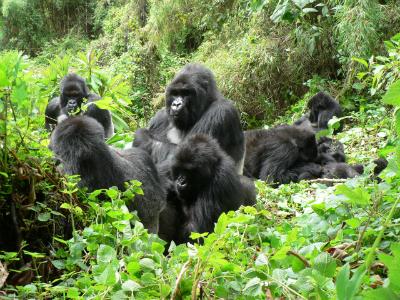 Kuryama's group in 2012