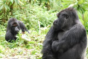 Kirahure and Vuba