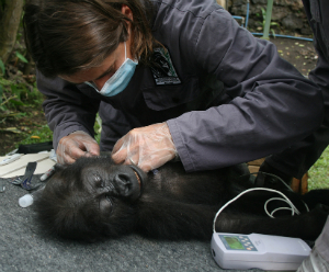 Dr. Magda examining Lubutu
