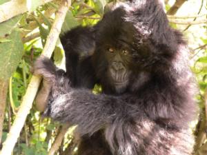 Kubana in 2006, when she entered the Adopt program