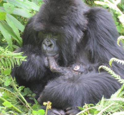Bukima cleans her newborn