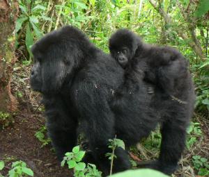 Kubaka carrying Urahirwa