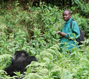 Jean Paul Hirwa observing gorilla behavior