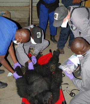 Serufuli gets a checkup at the Goma airport.