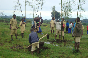 A youth environment club plants bamboo