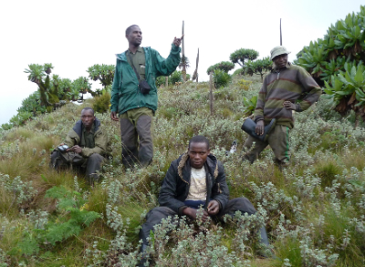 Karisoke trackers search for three males who left Pablo's group.