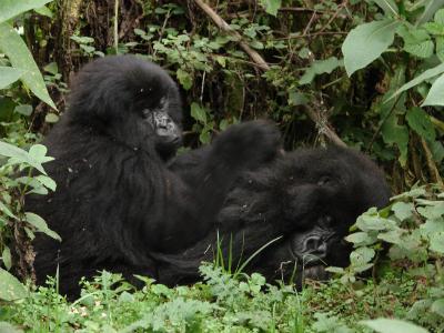 Ntaribi with his mother Ntobo