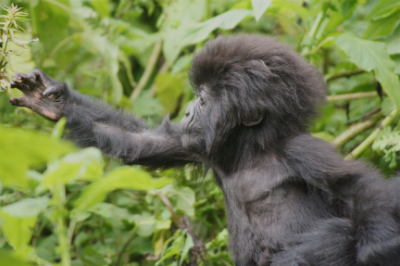 Umuiyanama, a young member of Pablo's group.