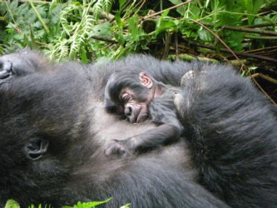 Mahirwe's newborn
