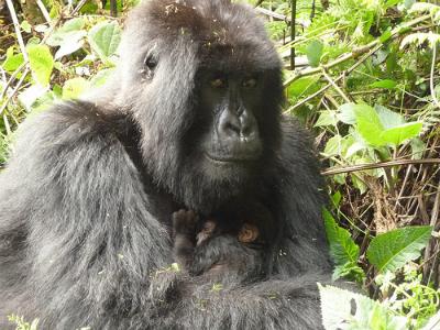 Bishushwe and new male infant