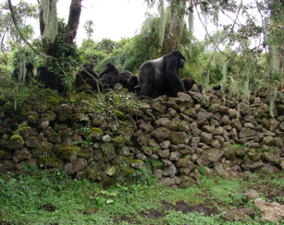 Ugenda's group on the park wall