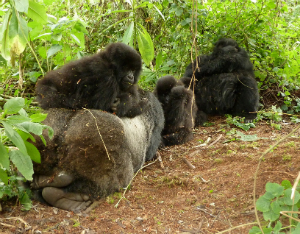 Isabukuru and infants