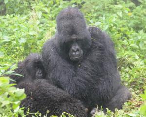 Kirahure and Rugira huddle in the rain