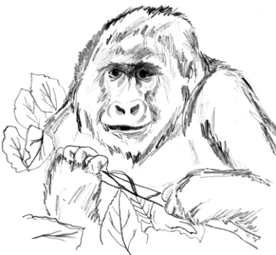 """One of the sketches in the """"Primates of Rwanda"""" coloring book."""