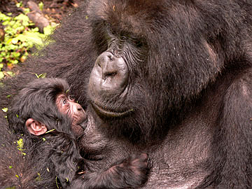 Mawingu with her infant