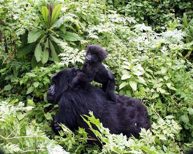 Infant Ruhuka with Mother Umurara