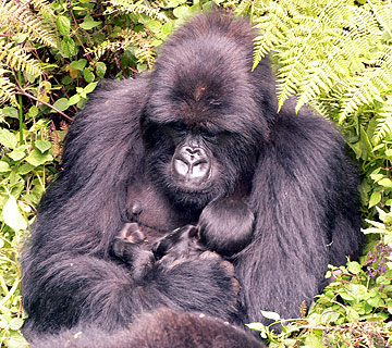 Bukima and 1-day-old infant