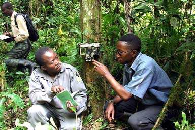 Searching for Grauer Gorillas