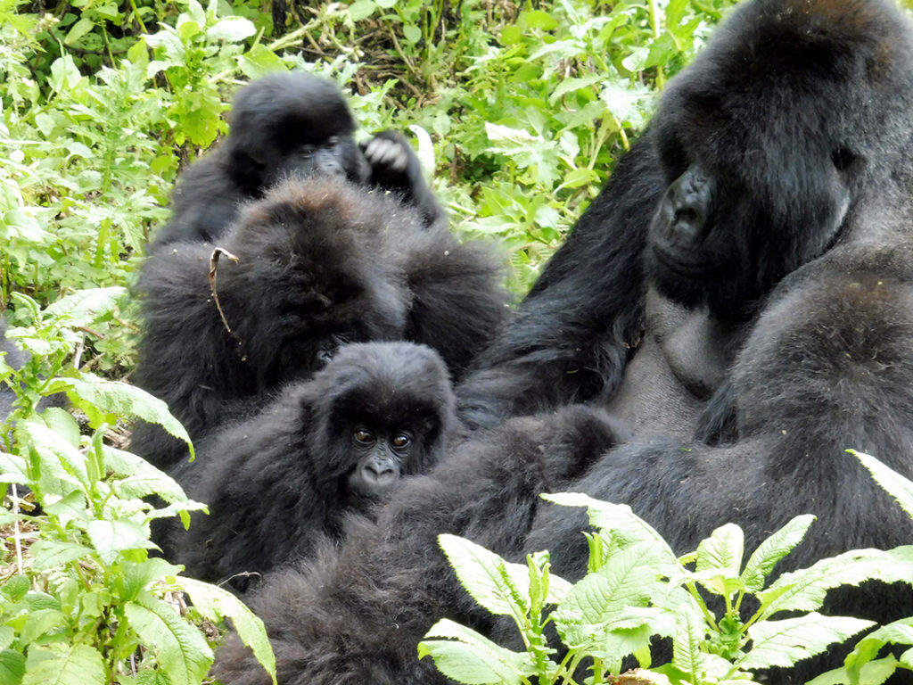 Isabukuru and Keza grooming Masunzu