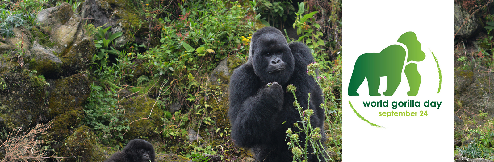 World Gorilla Day Dian Fossey
