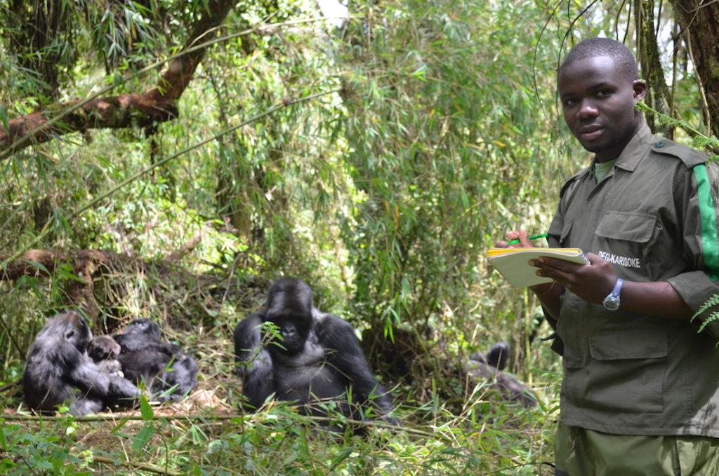 Jean Paul Hirwa New Gorilla Program Manager Dian Fossey