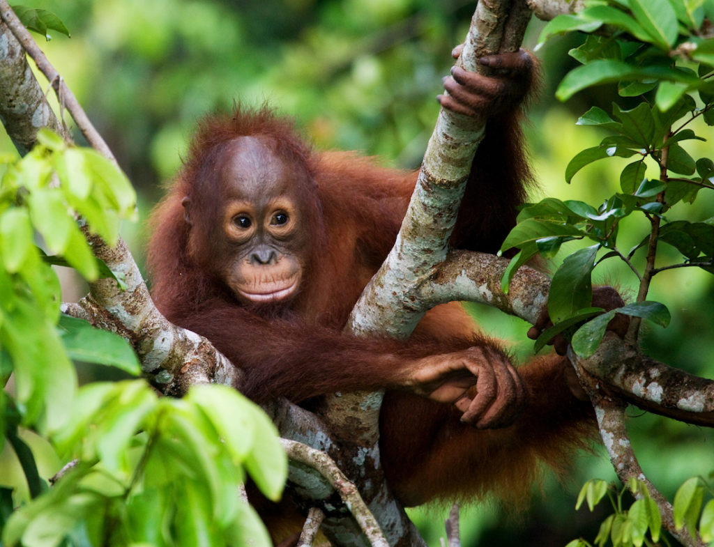 5 Ways to help save gorillas (and other wildlife too) | Dian