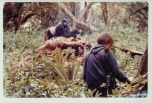 Habituating Gorillas