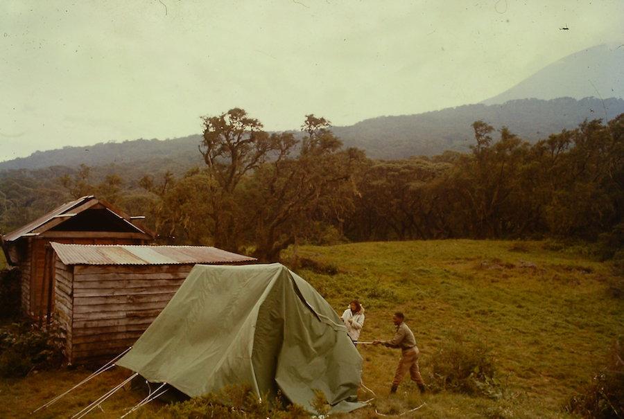 Dian Fossey Karisoke 1964