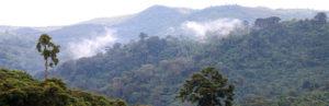 Rwanda where the Dian Fossey Gorilla Fund works