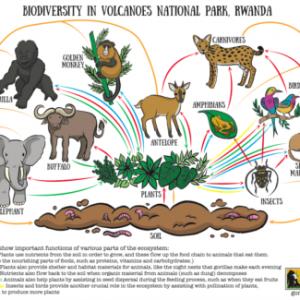 Biodiversity in Volcanoes National Park