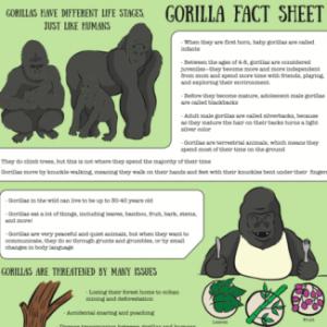 Gorilla Fact Sheet Part 2