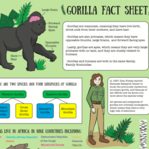 Gorilla Fact Sheet Part 1