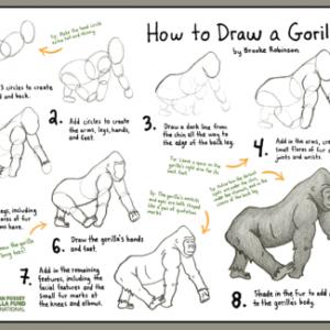 Gorilla Drawing Tutorial