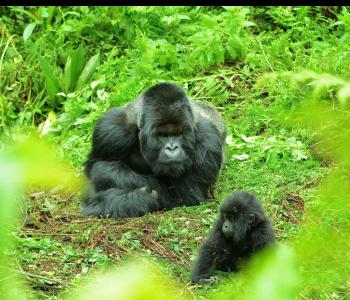 Mafunzo and Suruarwanda
