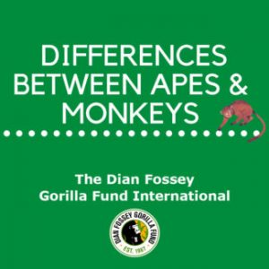 Difference Between Monkeys and Apes