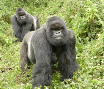 Icumbi and Turakomeje