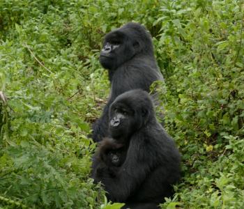 Mutobo, Akaramata, and Kazenza