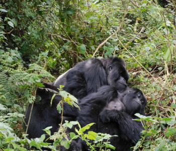 Mutobo and Akaramata