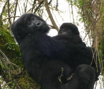 Nsanganira and Uwacu