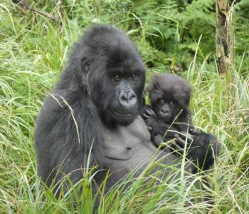 Isangano and Uwacu