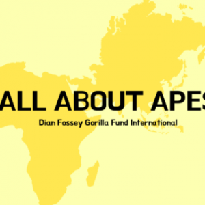 All about Apes