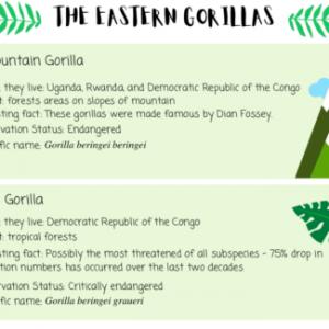 Gorilla Subspecies